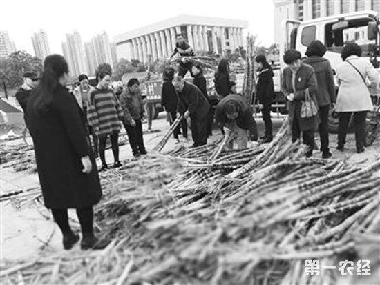 南阳高新:蔗农甘蔗滞销 市民助农解忧