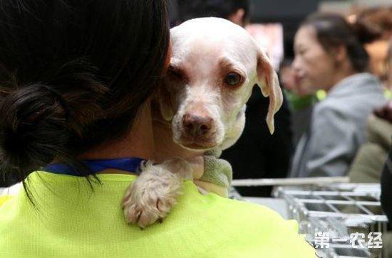 西宁开展特殊领养活动 6只狗4只猫找到新家