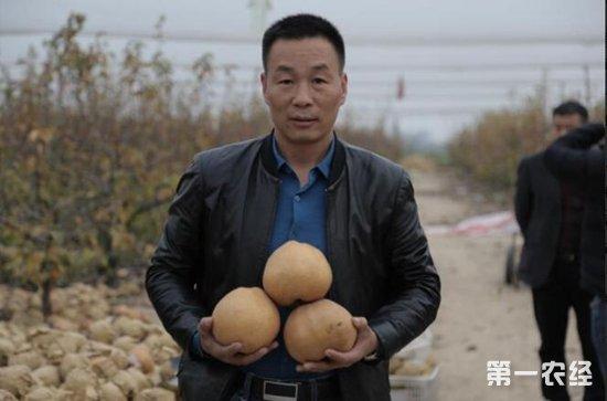 河南果协助农解决黄梨滞销难题