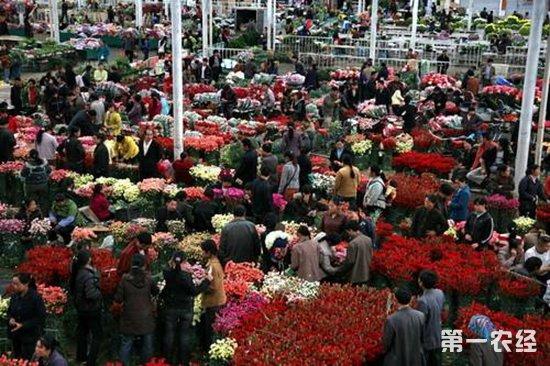 """3年建成""""昆明斗南花卉小镇"""" 形成体验式花卉旅游文化产业"""