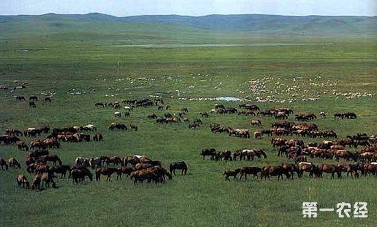 山东畜牧业规模居全国第一