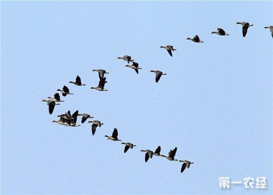 """中山坦洲镇林业部门发现非法捕鸟""""罗网"""""""