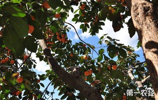 三门峡卢氏:产业发展助力村民脱贫增收