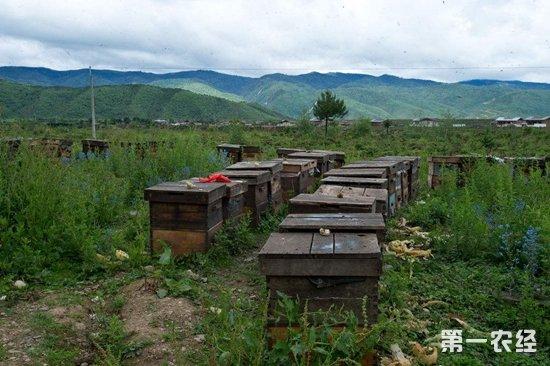 """石门养蜂业酿出""""甜蜜蜜"""""""