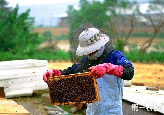 """养殖大户赵红:蜜蜂养殖成农户脱贫致富""""法宝"""""""