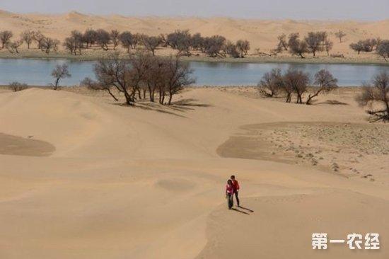内蒙古阿拉善盟:发展沙产业实现增收致富