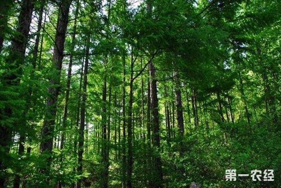 吉林省秋季森林防火期结束 无重大森林火灾发生