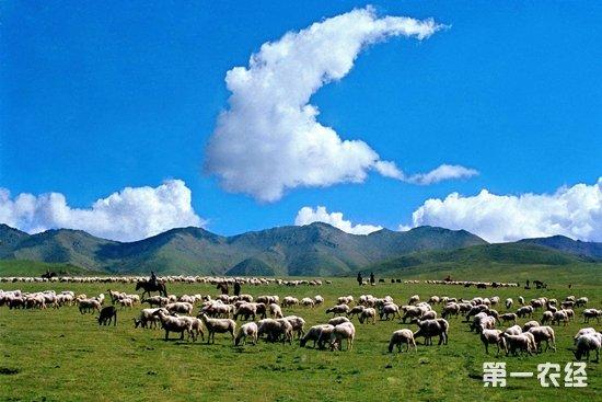 青海省畜牧业布局不断优化