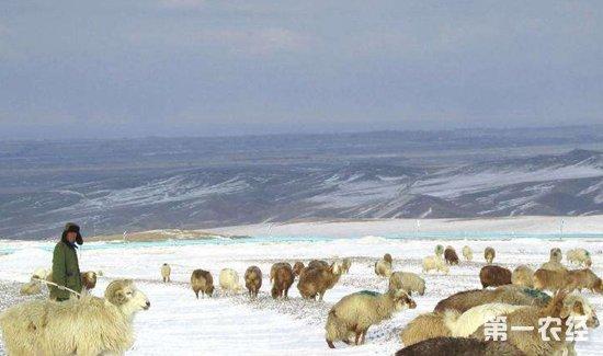 裕民县牲畜新品种引进推广成畜牧业现代化突破口