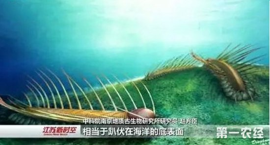 """中国古生物学者发现寒武纪奇异生物 命名为""""长形黎镰虫"""""""