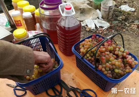 南阳内乡:5000多斤冬葡萄滞销 团县委援助望爱心购买