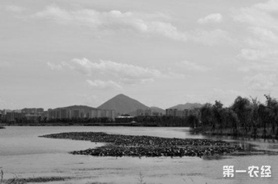 铜陵一湿地公园成候鸟天堂 管理人员称尽量不对外开放其栖息区