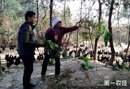 创业青年马宜飞:林下养殖黑羽乌鸡带领村民奔向致富路