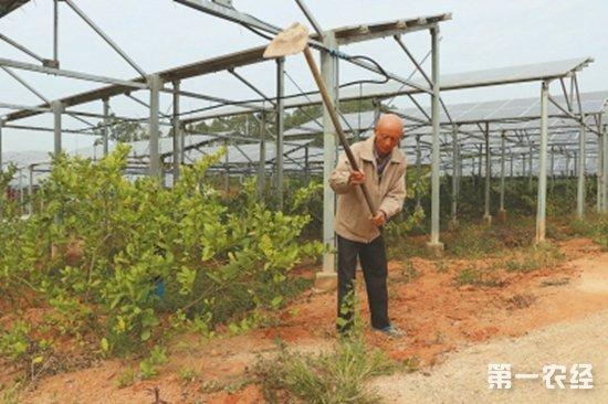 """漳浦:""""光伏""""创造就业机会 贫困户自力更生脱贫致富"""