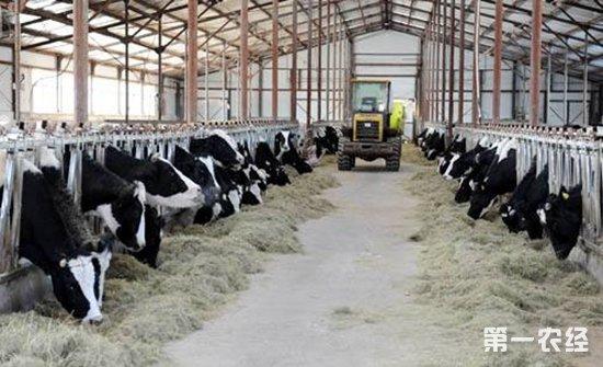 山东省畜牧业信息网_黑河市现代畜牧业迎来发展春天 - 畜牧信息 - 第一农经网