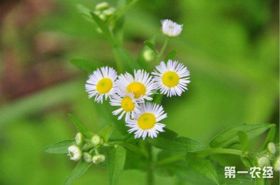 卧室首选这12种花,睡眠质量高而且美容养颜!