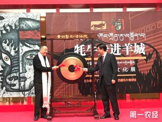 西藏牦牛在广州现身!元旦来广州艺术博物馆了解牦牛文化吧