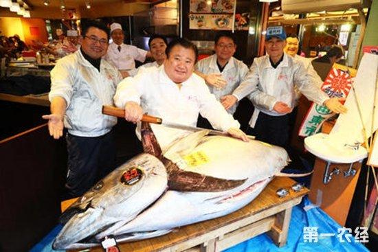 日本400斤重金枪鱼拍出210万巨款 单价居然不是最贵!