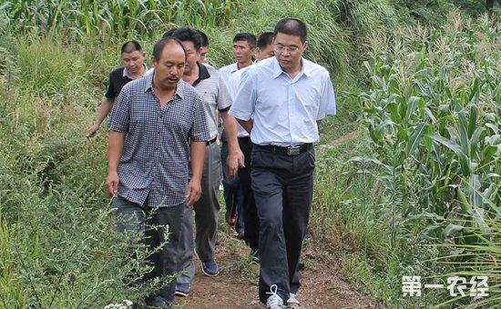 贵州铜仁:村民下山致富、企业上山发财的戏码正在上演
