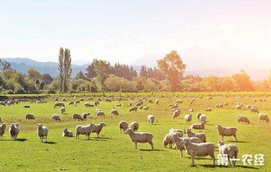 新西兰农业领域成最致命行业