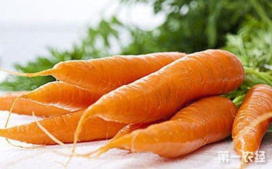 胡萝卜如何反季节栽培?胡萝卜反季节高效栽培技术