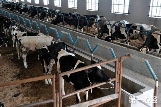 农村奶牛养殖八大误区