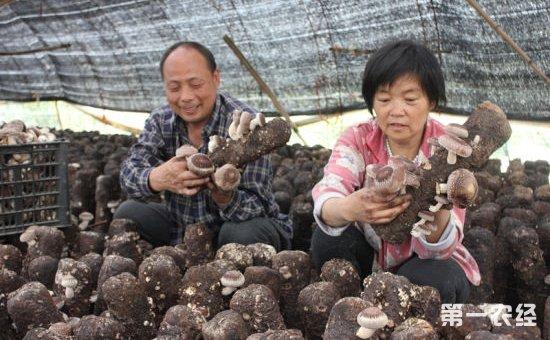 贵州李洋全夫妇:成立种植专业合作社带领村民共同致富