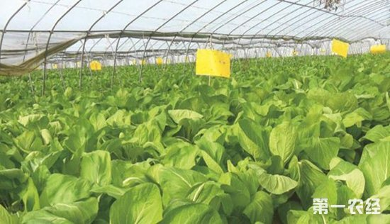 河北省印发三年农业改革计划 构建更高更强农产品供给体系