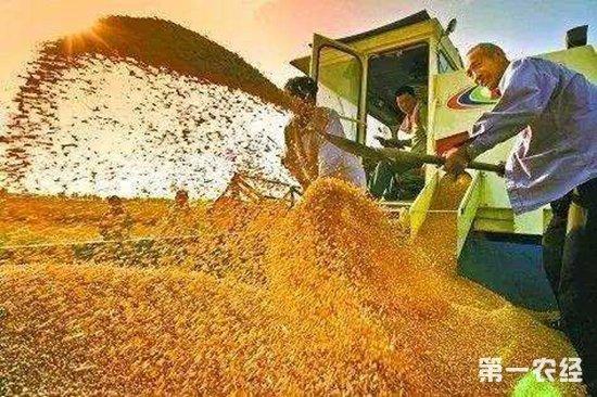 粮食最低收购价取消?不用担心!稻谷、小麦最低收购价只是下调