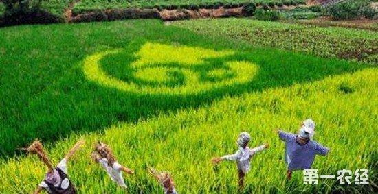 特色农业也有补贴!满足这些条件就可以领