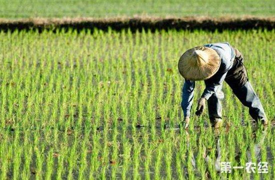 流转土地能用来建养殖设施吗?原来这种农田没问题!