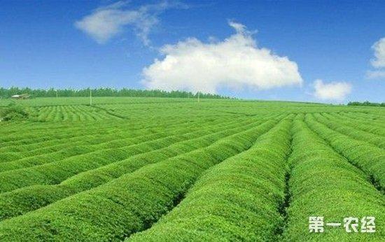 福建下发《意见》推进农业绿色发展 加快建设生态农业