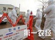<b>韩国出现高致病性禽流感!京畿道和忠南3处养鸡场已确诊!</b>