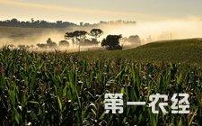 巴西圣保罗州等二季玉米产区出现有利降雨