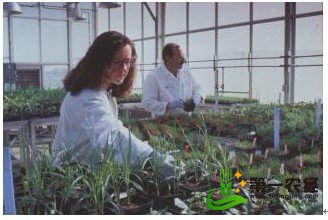 美国陶氏益农公司:杂草控制系统增加新的投资