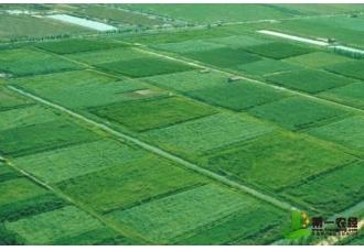 <b>如何建立新型农业社会化服务体系</b>