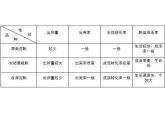 "<b>台湾泥鳅""PK""大陆泥鳅""</b>"