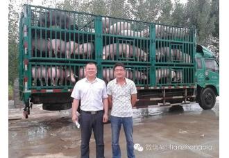 热烈祝贺武陟沃土养猪合作社再次引进天种种猪