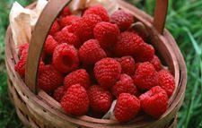 辽宁特产:东陵红树莓