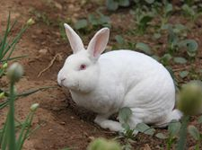 <b>獭兔几种常见疾病的防治?</b>