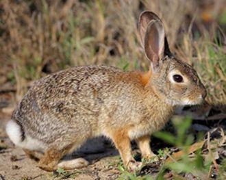 野兔养殖要点?