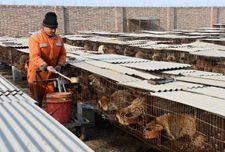 <b>河北:盐山特种养殖合作社  带动农民增收致富</b>