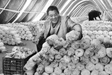 河南:龙泉村民种植蘑菇  开出致富花