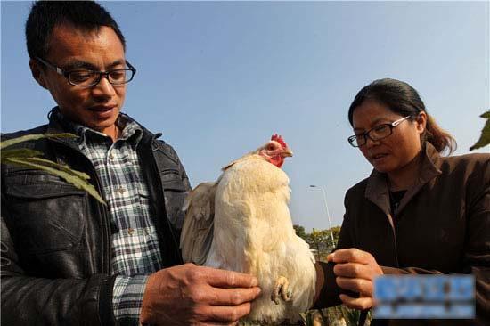 江苏硕士种菜养鸡