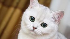 <b>猫难产救治办法?</b>