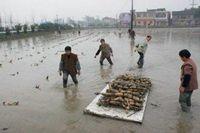 稻田+泥鳅,致富新途径