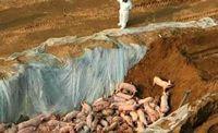 <b>口蹄疫席卷越南,45,000头牲畜死亡</b>