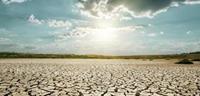 <b>2015年农业部门将损失22亿美元——加州受干旱影响</b>