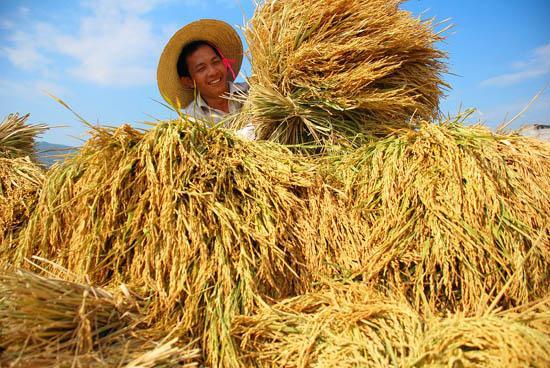 <b>亩产提高0.2% !粮产十一连增!!</b>
