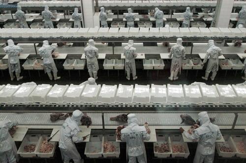<b>2亿元项目卡壳,新希望宝鸡市屠宰场搁浅20个月</b>